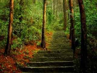 植树节—树林里面