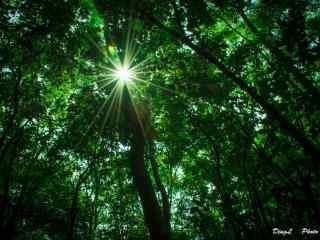 植树节—阳光透过