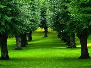 绿色护眼树林桌面