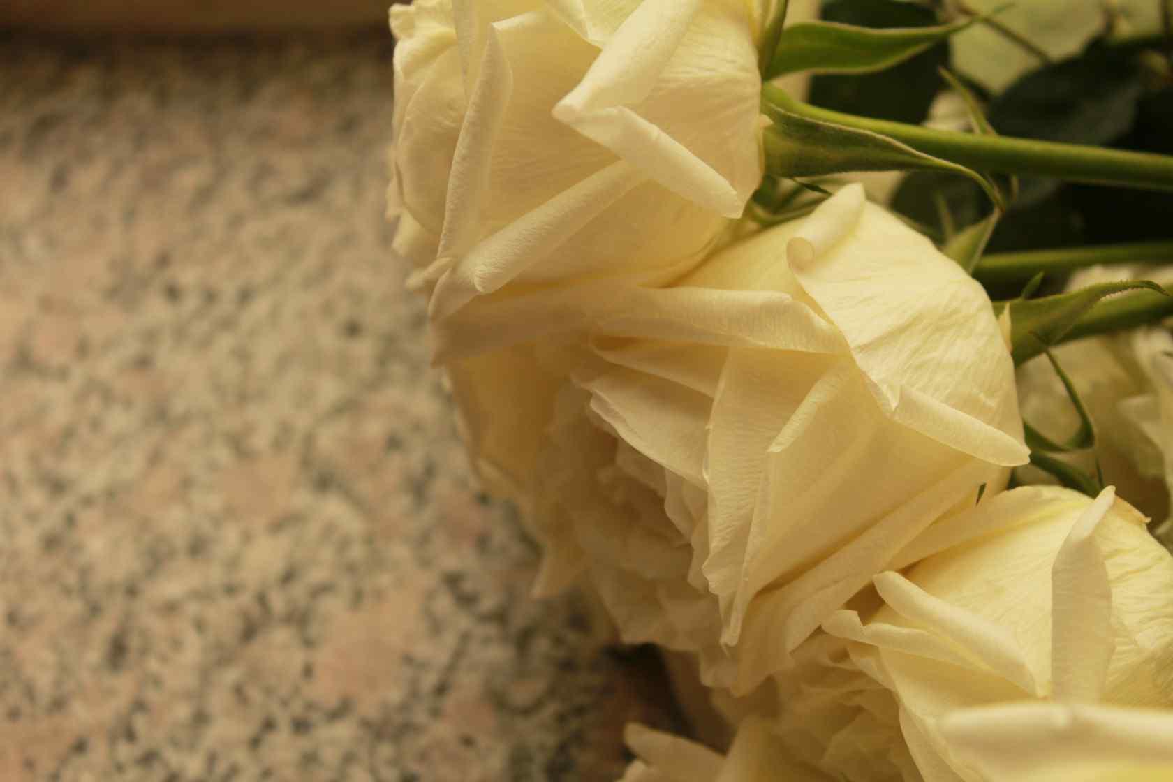 白色情人节-朦胧唯美白玫瑰
