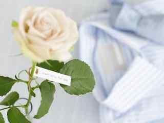白色情人节-文艺白玫瑰桌面壁纸