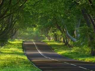 公路穿过整个树林