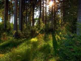 阳光穿过整个森林