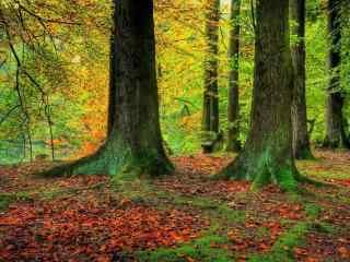秋日里落叶缤纷的