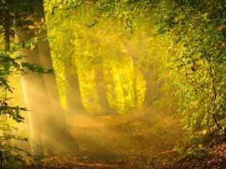 唯美光晕下的树林
