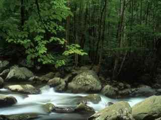 山林中潺潺的溪水