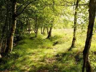 阳光照射在树林草