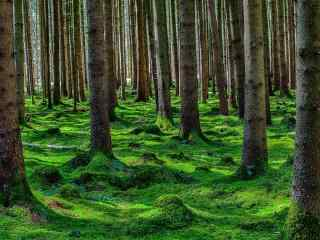 唯美绿色护眼树林