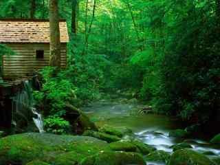 唯美绿色护眼山林