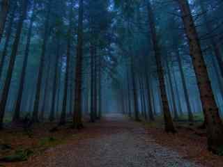 夜晚云烟缭绕的树