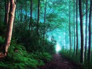 曲径通幽的树林桌