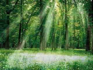 阳光穿透整个森林