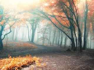 唯美云雾缭绕的枫