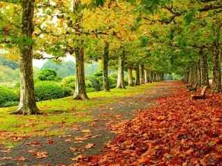 树林绿叶和红叶相