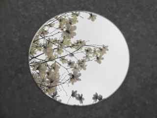 创意春天唯美植物