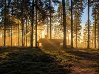 夕阳的余晖笼罩树
