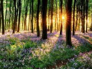夕阳余辉穿过树林