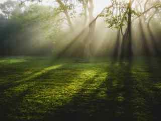 清晨的阳光穿过树