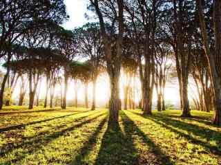 清晨阳光照射树林