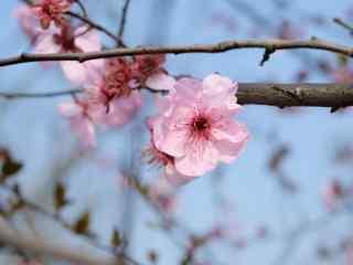 小清新春日好看的