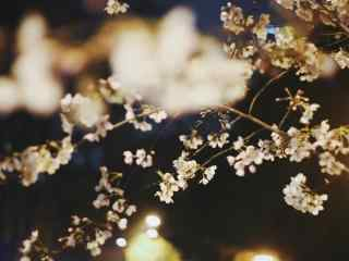 唯美暖灯下的樱花