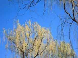 清明节习俗-蓝天