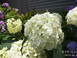 小清新好看的白色绣花球桌面壁纸