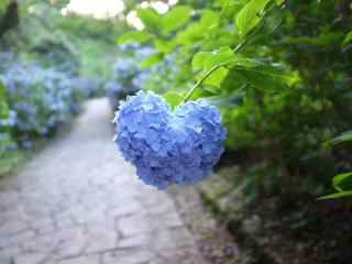 创意爱心蓝色绣花球桌面壁纸