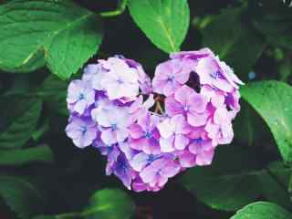 粉色的爱心绣花球桌面壁纸