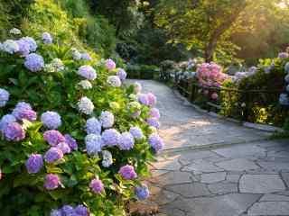 林荫小道上的绣花球桌面壁纸