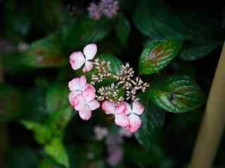 零星的粉色绣花球桌面壁纸