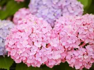 唯美好看的粉色绣