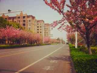 唯美粉色西府海棠