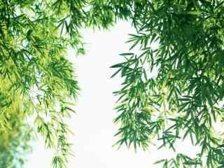 小清新竹叶桌面壁