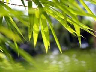 小清新竹叶图片壁