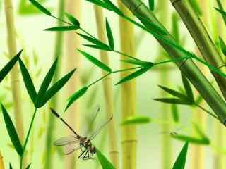 绿色唯美竹叶图片