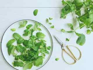 小清新绿色薄荷叶桌面壁纸