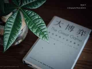 小清新文艺发财树桌面壁纸
