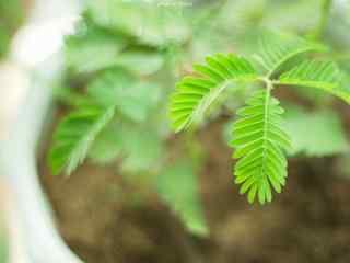 小清新绿色植物盆