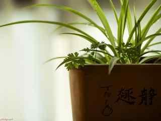 护眼盆栽植物吊兰桌面壁纸