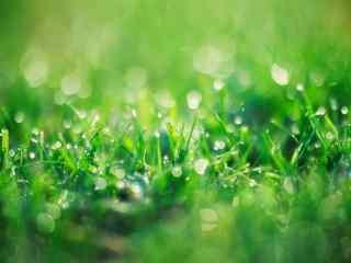绿色护眼翠艳欲滴