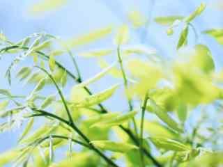 小清新绿色护眼植