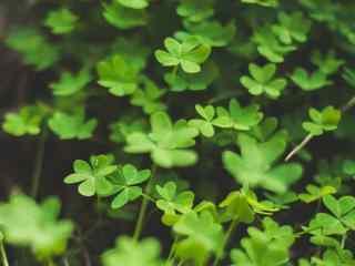 可爱绿色植物高清