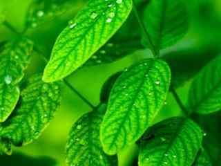 小清新绿色植物高