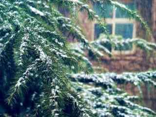 唯美大雪拍打在松树上桌面壁纸