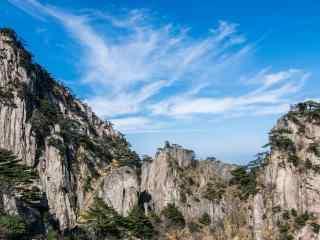 悬崖峭壁上的松树林桌面壁纸