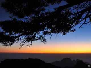 唯美黄山落日下的松树剪影桌面壁纸