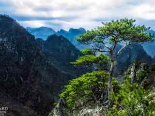 壮观的悬崖峭壁上的松树桌面壁纸