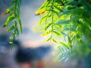 好看的绿色植物清