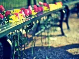 玫瑰创意摄影桌面